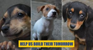 Help us build our new PAWS shelter
